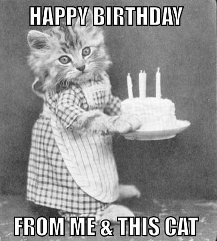 Happy birthday wishes from me and this cat meme