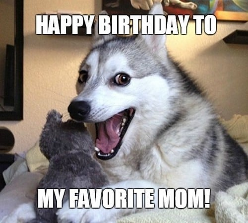 happy birthday dog mom meme