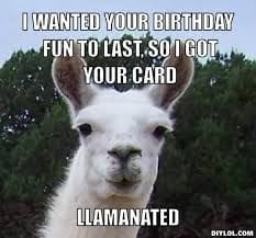 llama birthday graphic - i wanted your birthday fun to las so i got your card llamanated - llama pun meme