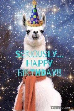 seriously llama birthday meme