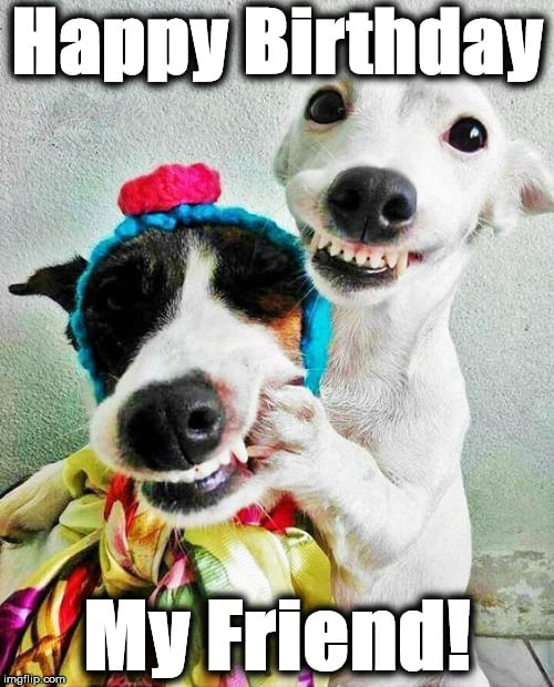 dog image happy birthday friend