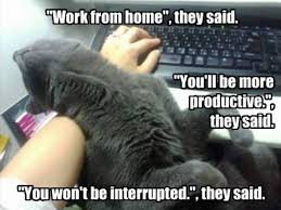 cats work from home memes