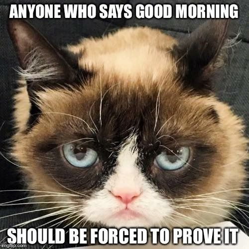 cat good morning meme anyone who says should have to prove it