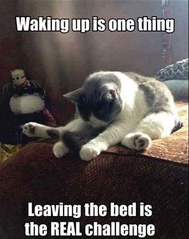 waking up meme - waking up is one thing, leaving the bed is the real challenge