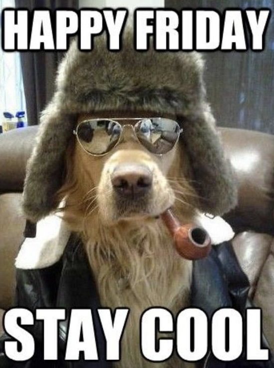 Happy Friday Stay Cool meme - photo of dog smoking pipe wearing sunglasses