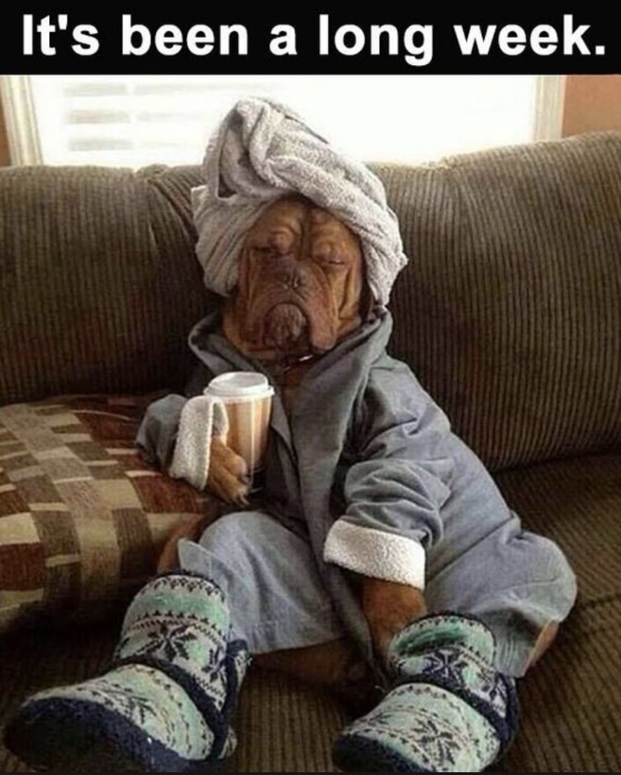 Its been a long week - dog lounging on couch - funny friday memes