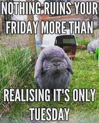 nothing ruins friday more than realizing its only tuesday