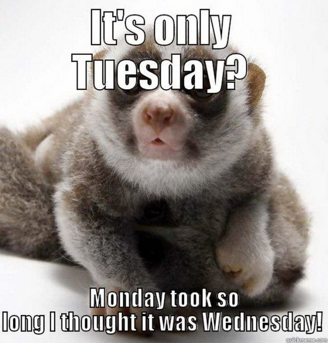 It's only Tuesday meme - Monday took so long I thought it was Wednesday