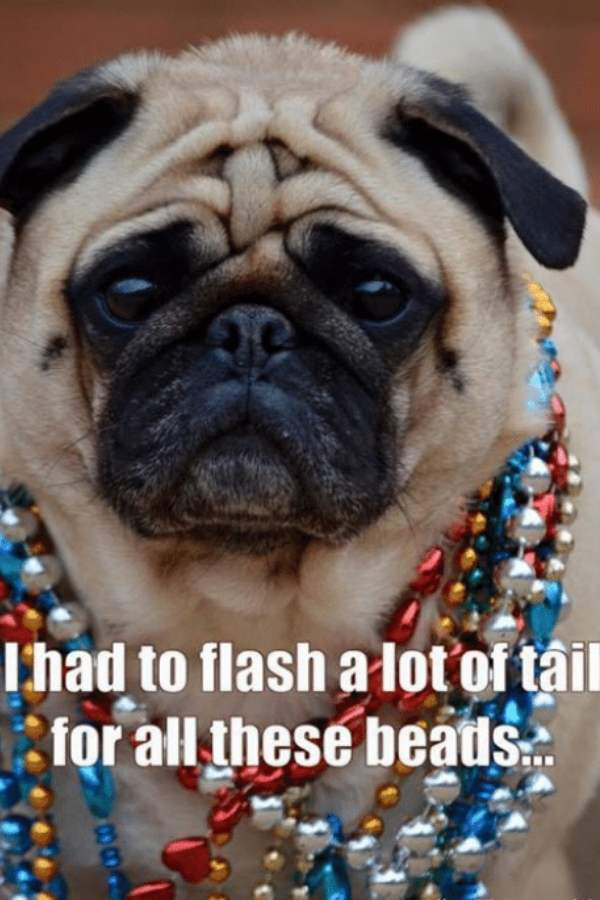 flash for beads - fat tuesday memes