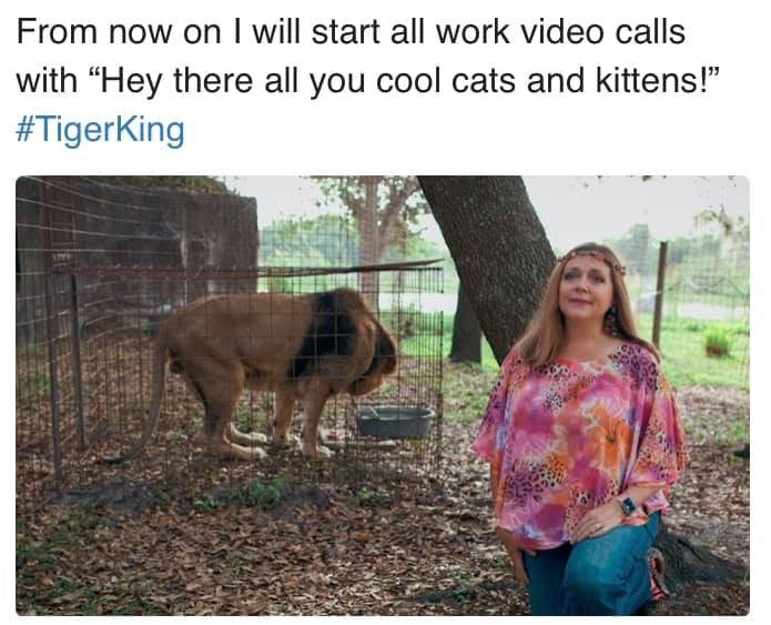 cool-cats-and-kittens-tiger-king-meme