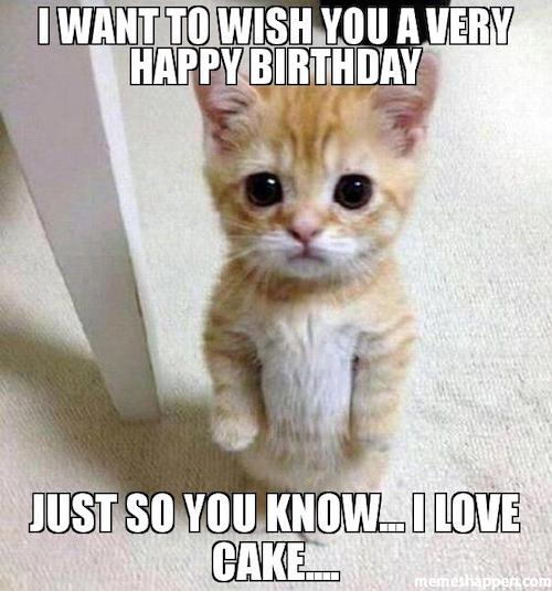 birthday cat meme - i want to wish you a very happy birthday just so you know i love cake