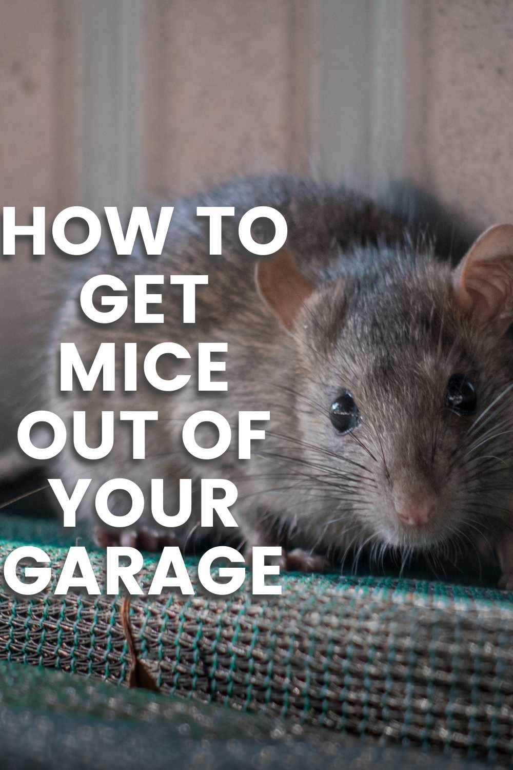 How to Get Mice Out of Your Garage