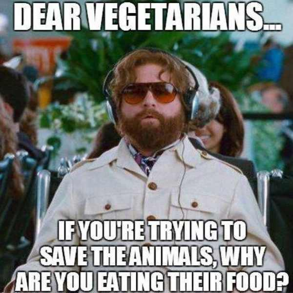 vegetarian meme dear vegetarian if you are trying to save the animals why are you eating their food?