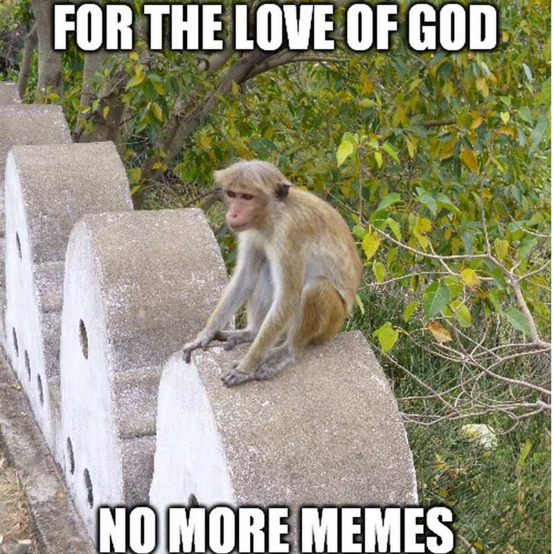NO MORE MEMES ABOUT MONKEy meme
