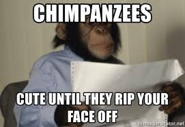 chimpanzees meme