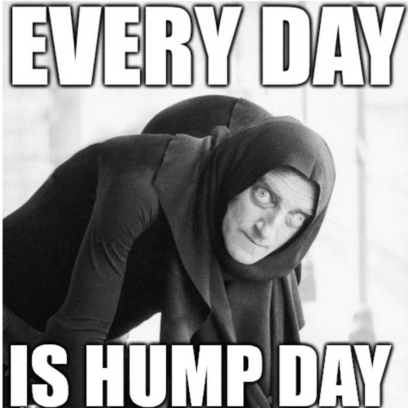 everyday is hump day meme