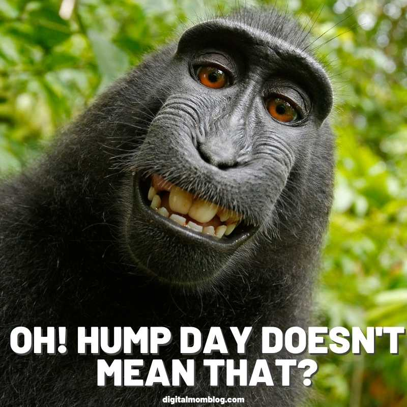 hump day doesnt mean that hump day meme