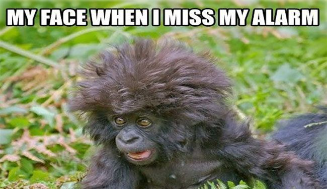 funny monkey memes - when i miss my alarm meme