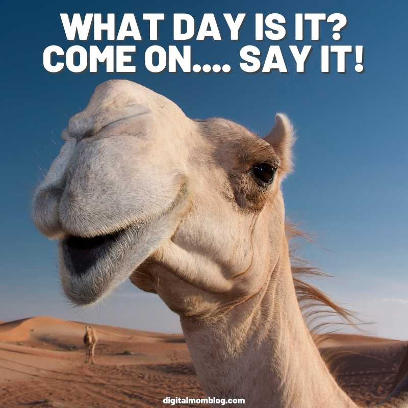 what day is it hump day meme