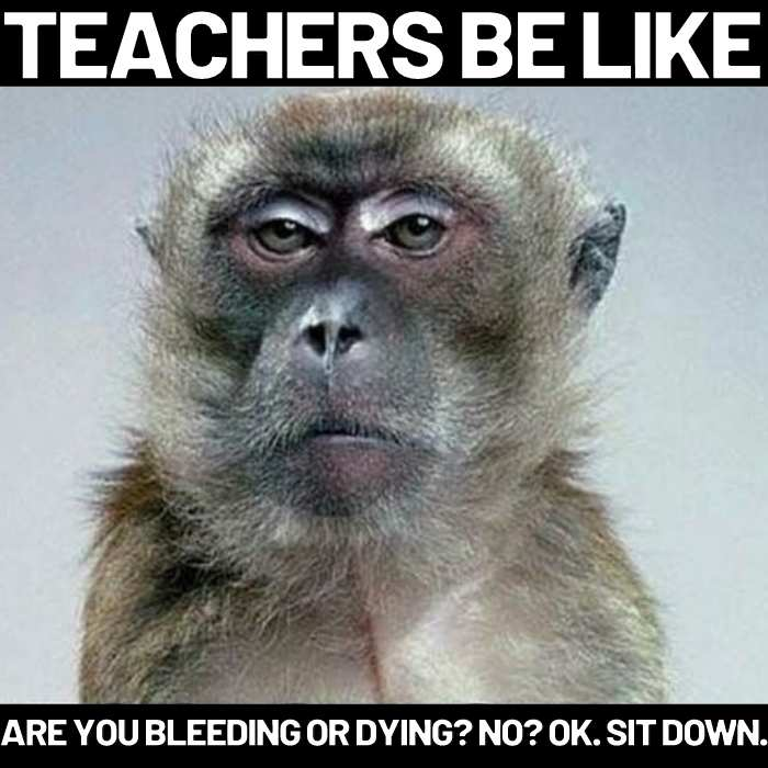 Teachers be like memes are you bleeding or dying no sit down
