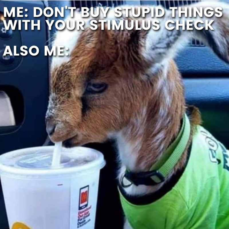 funny stimulus check meme - dont buy stupid things with your stimulus check - also me - goat in shirt drinking in car