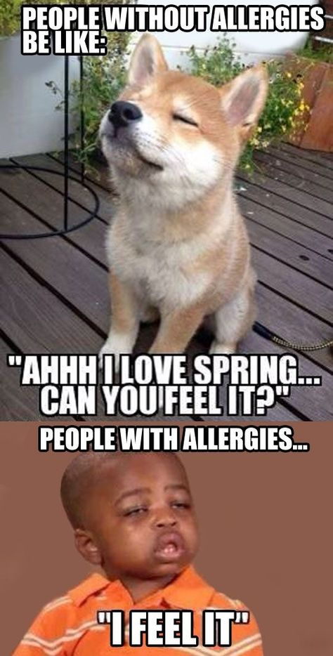 people without allergies vs people with allergies meme