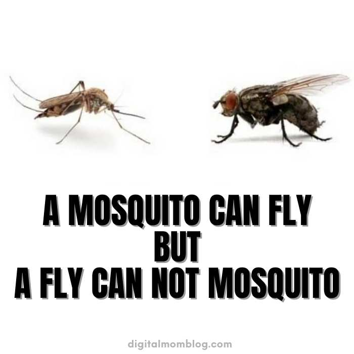 mosquito can fly meme